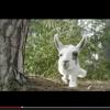 Hyresgästföreningens film Skogen